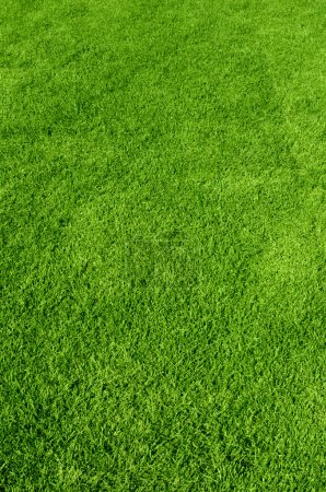 Textur des grünen Grases