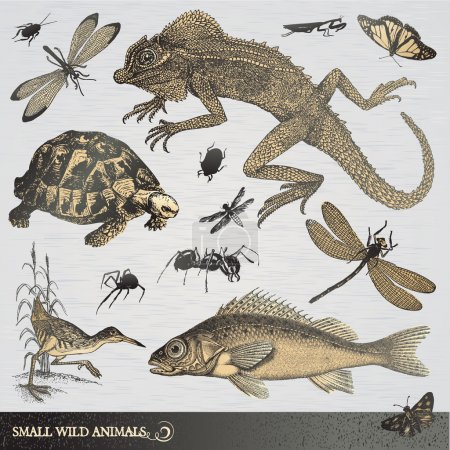 Illustration pour Ensemble de petits animaux sauvages de style gravé - image libre de droit