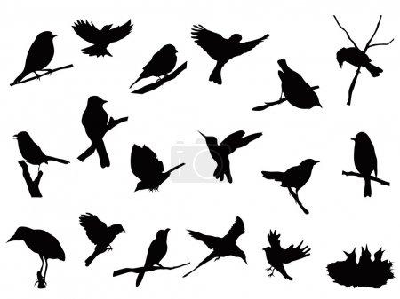 Illustration pour Ensemble de silhouettes d'oiseaux collection - image libre de droit