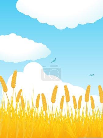 Summer cornfield portrait