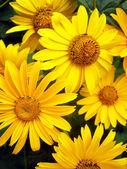Fresh yellow flower background
