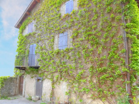 House wall with vines