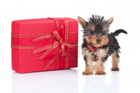 Toy puppy standing near a big present
