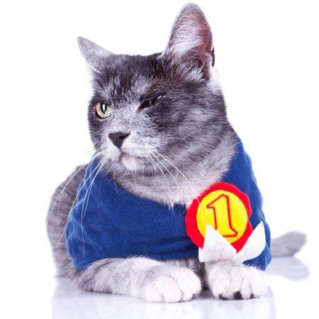 Suspicious champion cat
