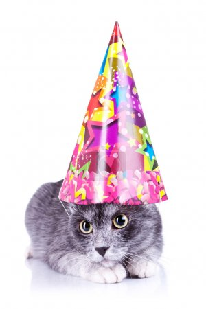 Cute cat wearing a party hat