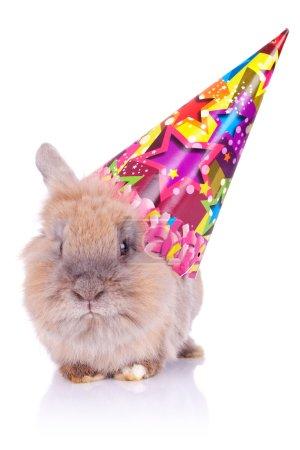 Photo pour Photo d'un petit lapin d'anniversaire mignon portant un chapeau de fête, sur fond blanc - image libre de droit