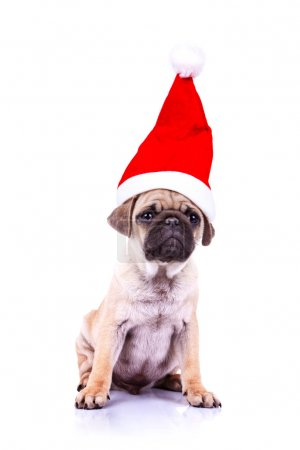 Photo for Curious little pug puppy wearing a santa hat, sitting onwhite background - Royalty Free Image