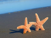 Two Starfish with Shadows on the Beach with Ocean Waves in the Background