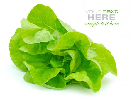 Photo for Fresh green salad isolated on white background - Royalty Free Image
