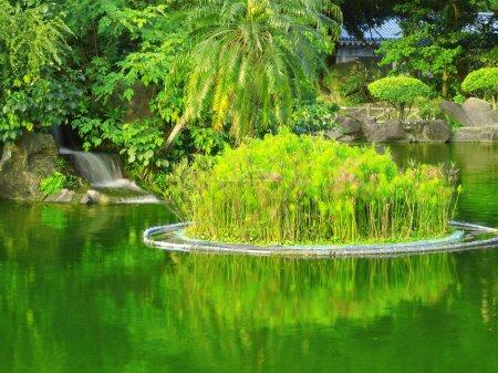 Plants and lake