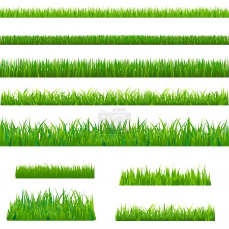Illustration for Big Green Grass, Isolated On White Background, Vector Illustration - Royalty Free Image