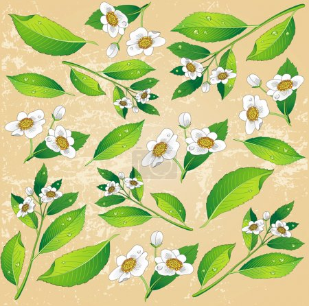 Background with a painted green tea leaves and white flowers