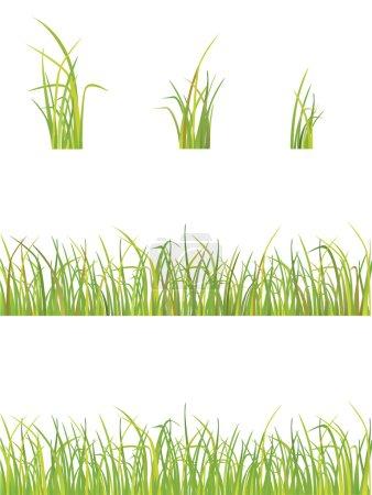 Illustration for Vector illustration of green grass - Royalty Free Image