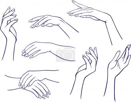Illustration pour Les mains de la femme isolées sur fond blanc . - image libre de droit