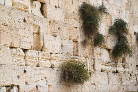 Close up of Western wall. Jerusalem. Israel.