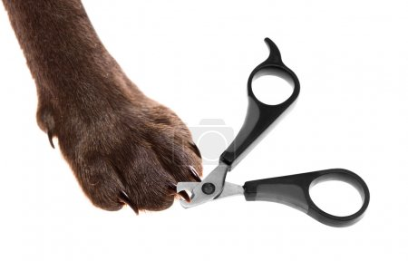 Claw scissors and a paw with claws