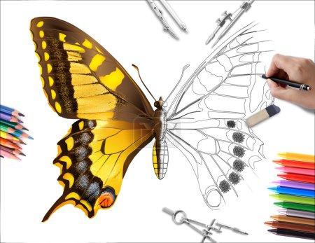 Photo pour Dessin à la main un papillon jaune - image libre de droit