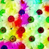 Heřmánek s krásné barevné listí