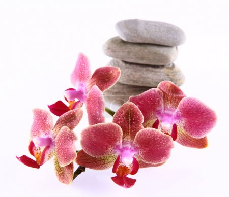 Stones and orchids