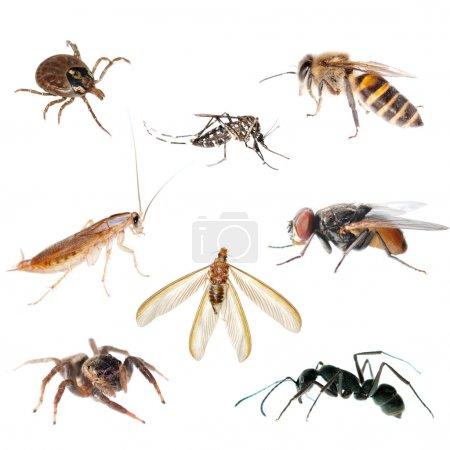 Animal insect bug