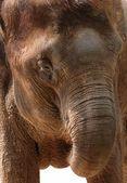 Wild animal elephant