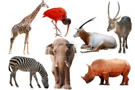 Photo for Wild animal collection isolated on white - Royalty Free Image