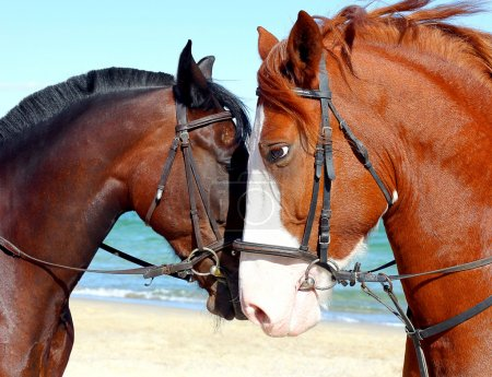 Two heads of beautiful horses