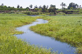 Small stream through marshland