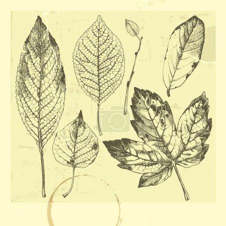 Illustration for Botanical set: vintage highly detailed hand drawn leaves. - Royalty Free Image