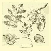 Botanical set: vintage highly detailed hand drawn leaves