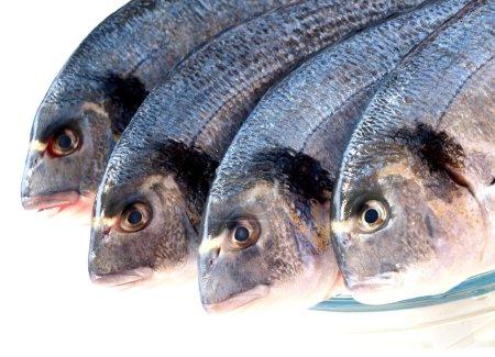 Photo pour Poissons de mer cru isolés sur blanc - image libre de droit