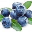 Blueberries with leaves on white background....