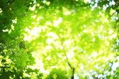 Sun's rays shining through the lush greens.