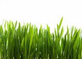 herbe d'art vert sur fond blanc