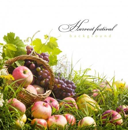 Photo pour Fond d'automne abstrait avec des fruits sur l'herbe - image libre de droit