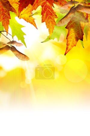ID de imagen B7160093