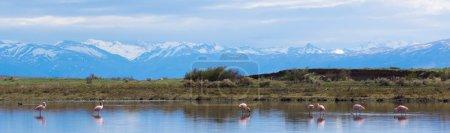 Foto de Panorama del lago con flamencos rosados. en el fondo las montañas con cimas nevadas. - Imagen libre de derechos