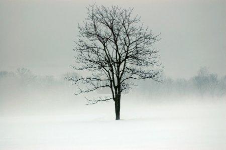 Photo pour Arbre dans un champ entouré de brouillard et de neige - image libre de droit
