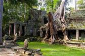 Tree Laden Temple