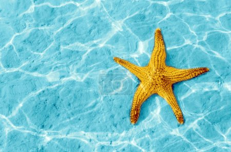 Photo for Starfish in blue water with light reflection. - Royalty Free Image