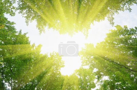 Photo pour Feuilles vert forêt et rayon de soleil - image libre de droit