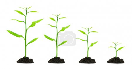 Photo for Four small tree isolated on white - Royalty Free Image