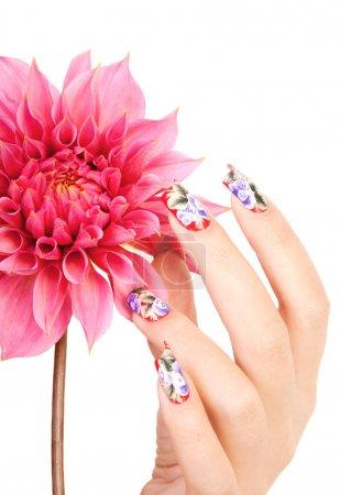 Photo pour Main féminine avec beaux ongles sur une fleur rose, sur un fond blanc - image libre de droit