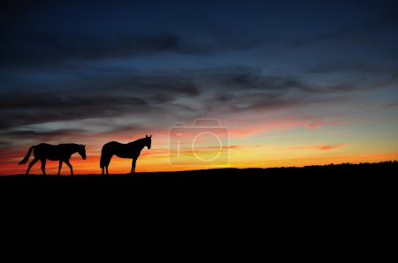 Horses walking in the sunset