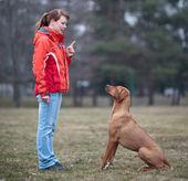 Předlohy a její poslušný (rhodéského ridgebacka) pes