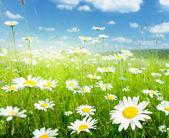 """Постер, картина, фотообои """"Field of summer flowers"""""""