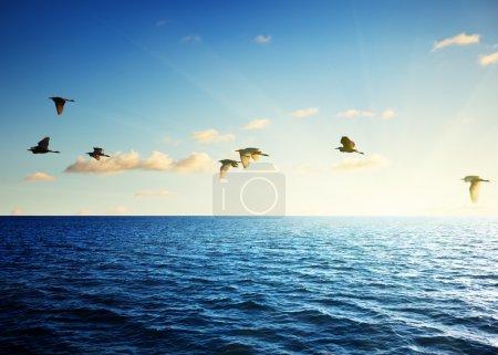 Birds and caribbean sea