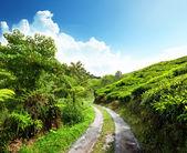 Silniční a čajové plantáže cameron highlands, Malajsie