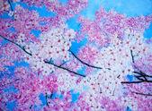 """Постер, картина, фотообои """"вишневый цвет. живопись. искусство."""""""