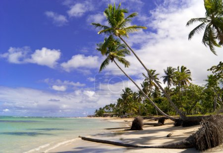 Wild caribbean beach. Samana.